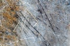 rascada-puma-biodiversidadDGBAP